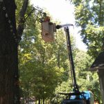 Carolina Tree Works Rock Hill SC Professional Tree Care