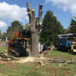 Carolina Tree Works Rock Hill SC Tree Removal